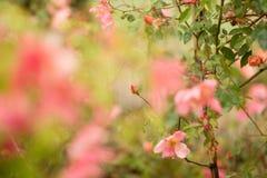 Abstract nam toe als bloemachtergrond Royalty-vrije Stock Afbeelding