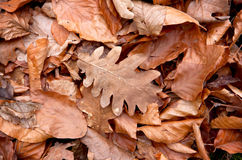 Autumn leafage. Abstract natural background with autumn leafage Royalty Free Stock Photo