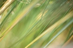 An abstract natural background of grasses royalty free stock images