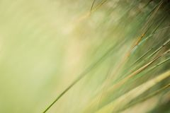 An abstract natural background of grasses royalty free stock image