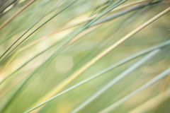 An abstract natural background of grasses stock images