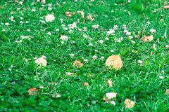 Abstract natural background of a green lawn Royalty Free Stock Image