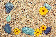 Pebbles and flowers on coquina shells Stock Photography