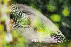 Abstract natural background Stock Image