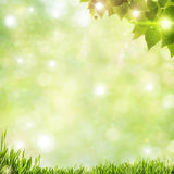 Abstract natural backgrounds Royalty Free Stock Image