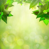 Abstract natural backgrounds Stock Photo