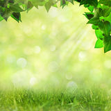 Abstract natural backgrounds Royalty Free Stock Photography