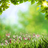Abstract natural backgrounds Stock Photography