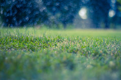 Abstract natural backgrounds with beauty bokeh Stock Images