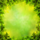 Abstract natural backgrounds Stock Image