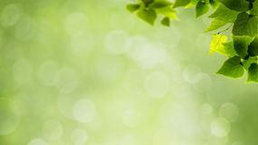 Abstract natural backgrounds. With green foliage and beauty bokeh Stock Photo
