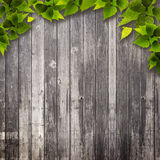 Abstract natural backgrounds. Stock Photo