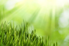 Abstract natural backgrounds. With green grass and beauty bokeh royalty free stock images