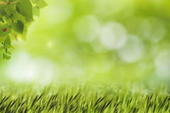 Abstract natural backgrounds with green grass Stock Photography