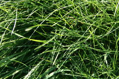 Abstract natural backgrounds on green grass. Royalty Free Stock Image