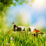 Abstract natural backgrounds with green grass Stock Images