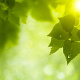 Abstract natural backgrounds. Royalty Free Stock Photo