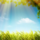Abstract natural backgrounds with summer foliage Stock Photos