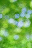 Abstract natural blur background, defocused leaves Stock Photography