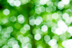 Abstract Natural Bokeh, green blurred bokeh. Abstract Natural Bokeh, green blurred bokeh Royalty Free Stock Images
