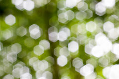 Abstract Natural Bokeh, green blurred bokeh. Abstract Natural Bokeh, green blurred bokeh Royalty Free Stock Photography