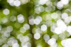 Abstract Natural Bokeh, green blurred bokeh. Abstract Natural Bokeh, green blurred bokeh royalty free stock photography