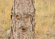 Abstract Natural Face In Tree Royalty Free Stock Image