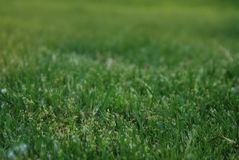 Abstract Natural Green Grass Backgrounds in Forest Park Outdoor Natural. Abstract Natural Green Grass Backgrounds in Forest Park Outdoor Royalty Free Stock Photo