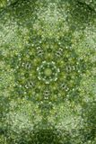 Abstract greenery background, green leaves with kaleidoscope effect. Abstract natural greenery background, green leaves with kaleidoscopic effect royalty free stock photos