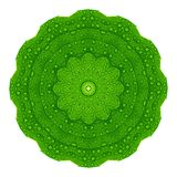 Green leaves with kaleidoscope effect on white background. Abstract floral mandala pattern. Abstract natural greenery pattern, green leaves with kaleidoscopic stock photos
