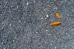 Abstract natural pattern of grey color hard gravel concrete surface background floor with yellow fallen dried tree leaves. Phuket royalty free stock photo