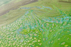 Abstract natural patterns on Ukrainian river Dnepr covered by cyanobacterias Stock Images