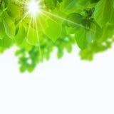 Abstract natural Royalty Free Stock Image