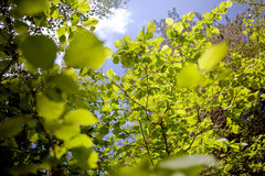 Abstract nature. Abstract image of green leaves of trees against the sky royalty free stock photos