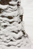 Abstract nature. Close up shot of snow on the trunk of Oak tree Stock Photos