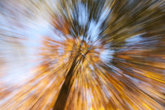 Abstract in nature. Royalty Free Stock Images