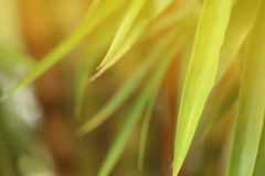 Abstract nature background of blurred green bamboo leave with warm light. Effect stock photos