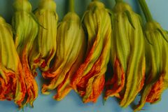 Abstract nature background. Cropped shot of zucchini buds. Zucchini blossoms, close up royalty free stock photos