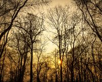 Silhouette of dry forest and sun nature background. Abstract nature background of dry forest leafless tree and sun at dawn or evening time royalty free stock photos