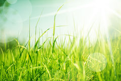 Abstract nature background with grass stock photography
