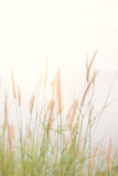Abstract nature background with grass in the meadow Stock Photos