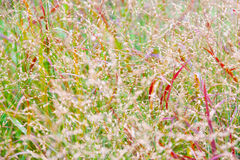 Abstract nature background grass Royalty Free Stock Images