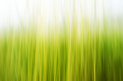 Abstract nature background Stock Image
