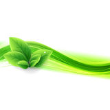Abstract nature background. Abstract nature green leaves background vector illustration