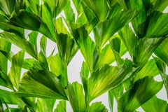 Abstract nature background of green palm leaf tropical tree. Royalty Free Stock Images
