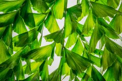 Abstract nature background of green palm leaf tropical tree Stock Images