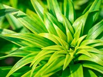 Abstract nature background with green plant stock image