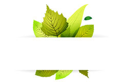 Abstract nature background with leaves Stock Image