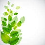 Abstract nature background with leaves. Royalty Free Stock Photography