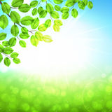 Abstract nature background with leaves and sun. Vector spring day background with sunshine royalty free illustration